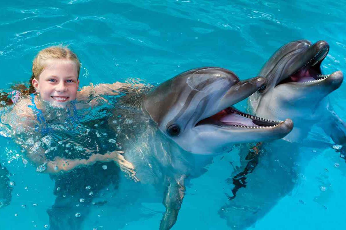 nuotare-delfini-