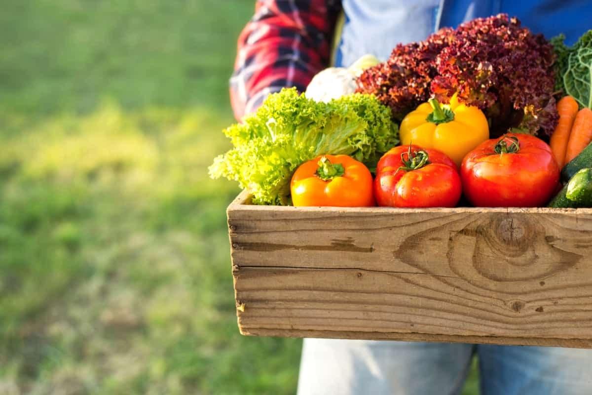 Fiori Da Piantare Nell Orto mese di maggio: semina, raccolto e lavori nell'orto - greenme.it