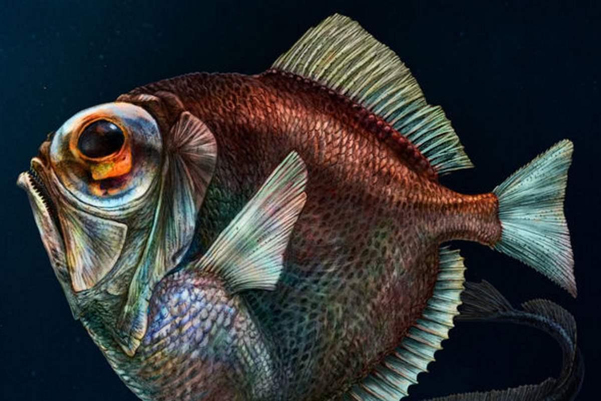 pesci abissi vista colori