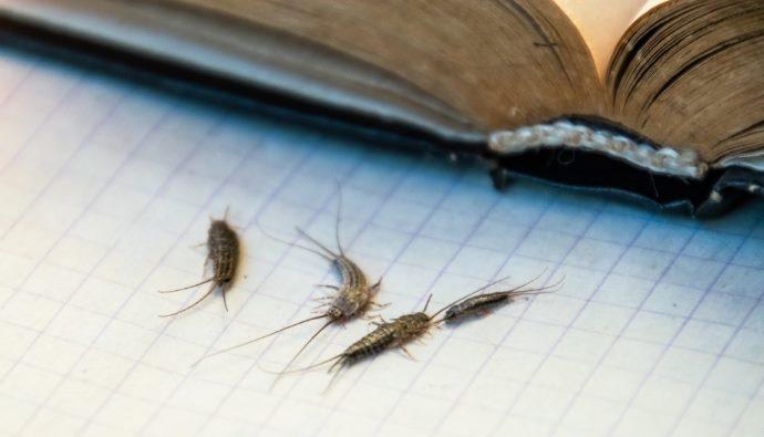 pesciolini argentati libri