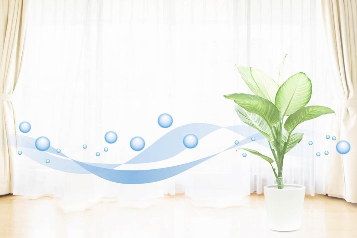 piante-casa-