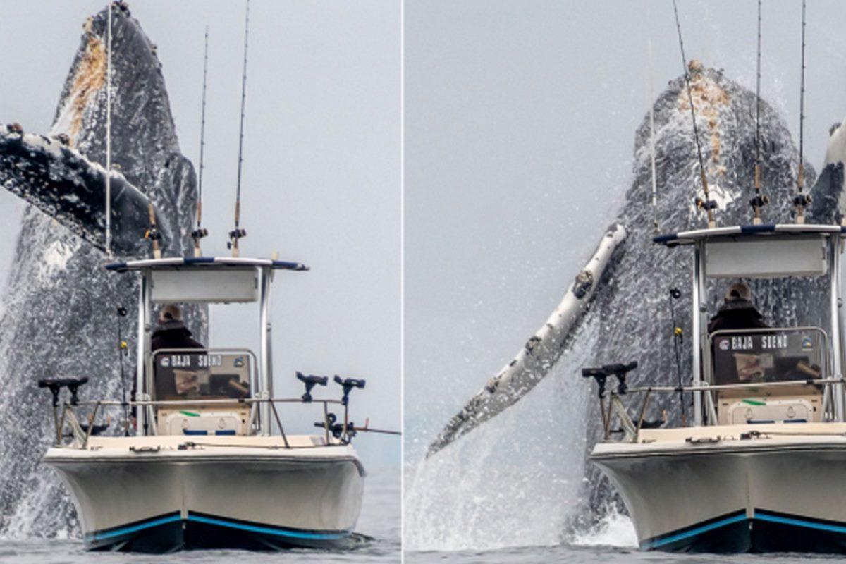 salto balena