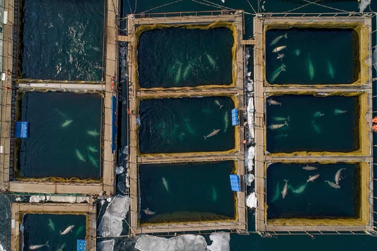 prigioni-balene-russia