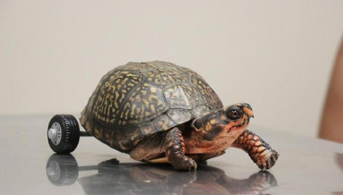 tartaruga-protesi-zampe-lego
