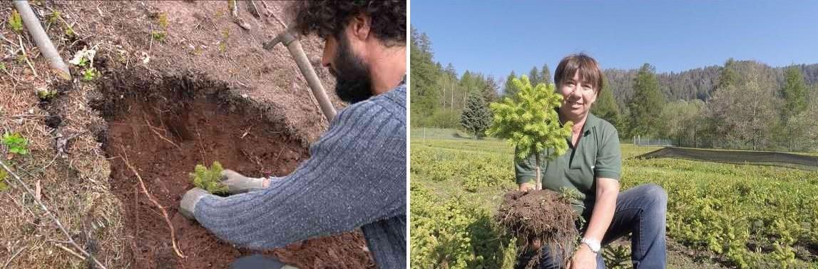alberi trentino