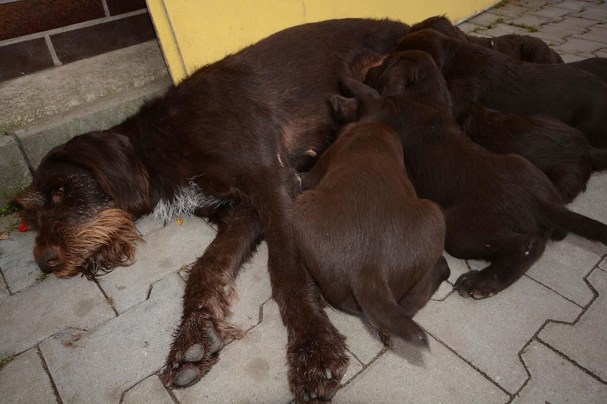 puppy-farm-