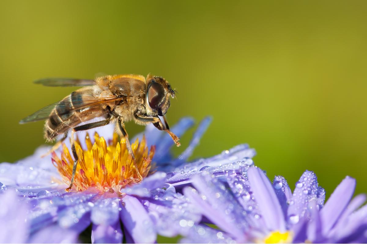 api simboli numerici colonie