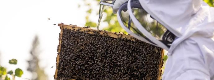 api-numeri-colonie-pesticidi