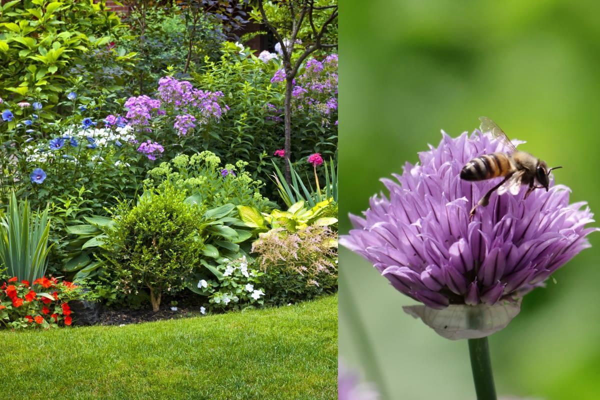 giardino-attira-api