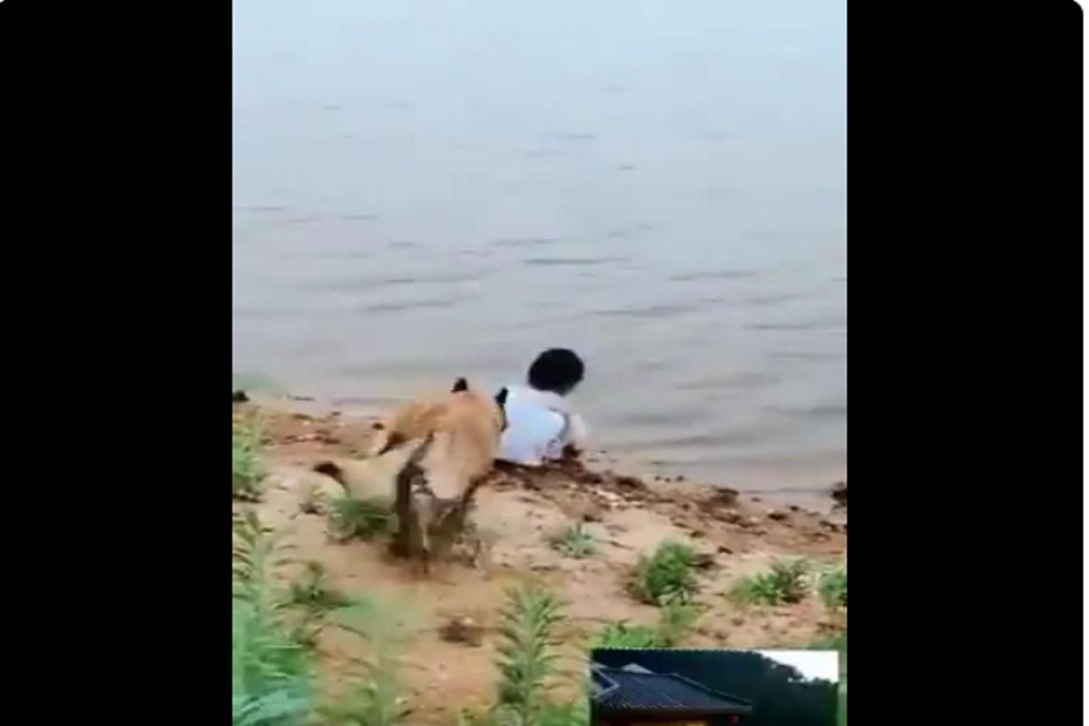 Bambina salvata dal suo Pastore Tedesco
