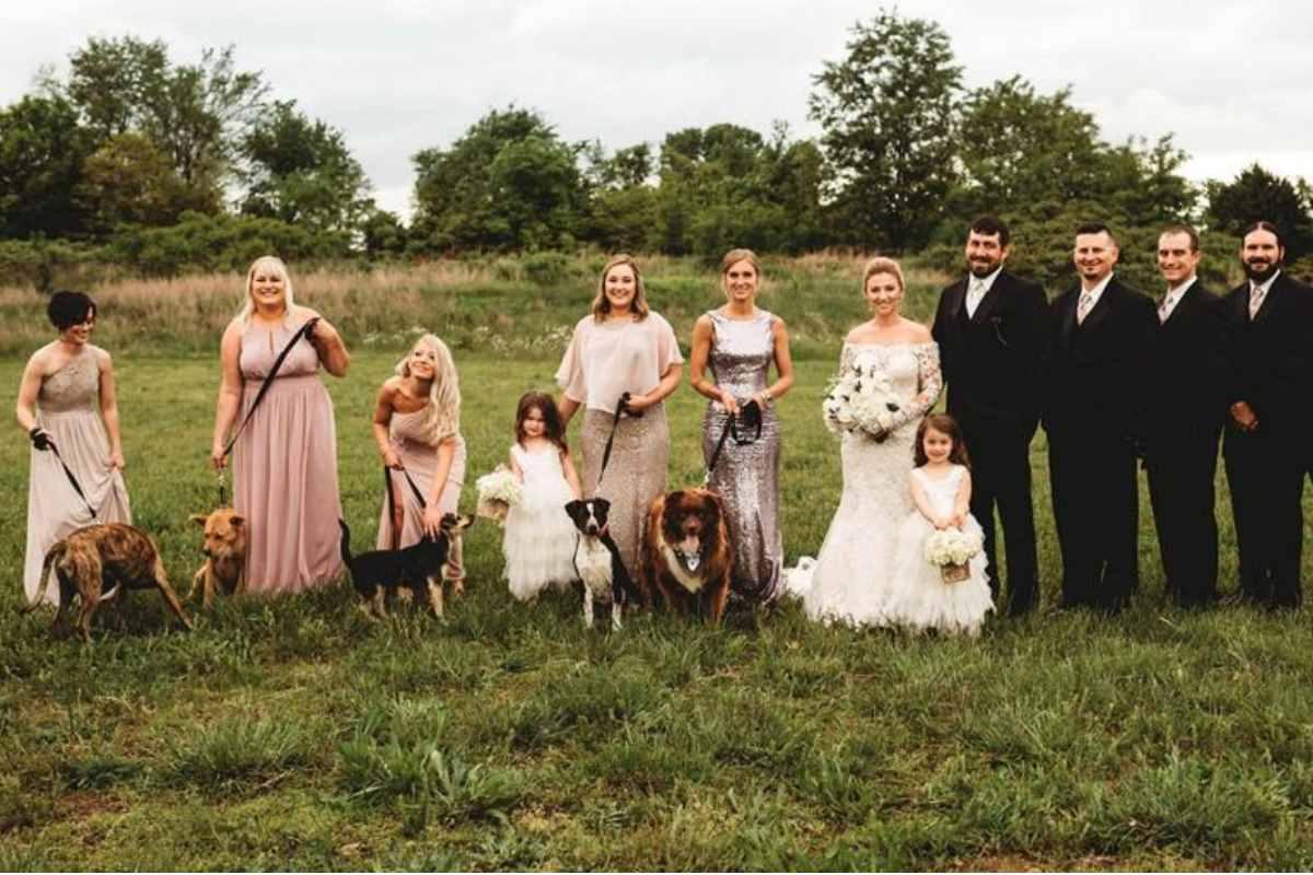 adozione cani matrimono