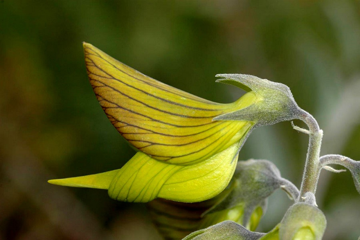 Fiori Verdi Nomi.I Petali Di Questo Fiore Sembrano Piccoli Colibri Greenme It