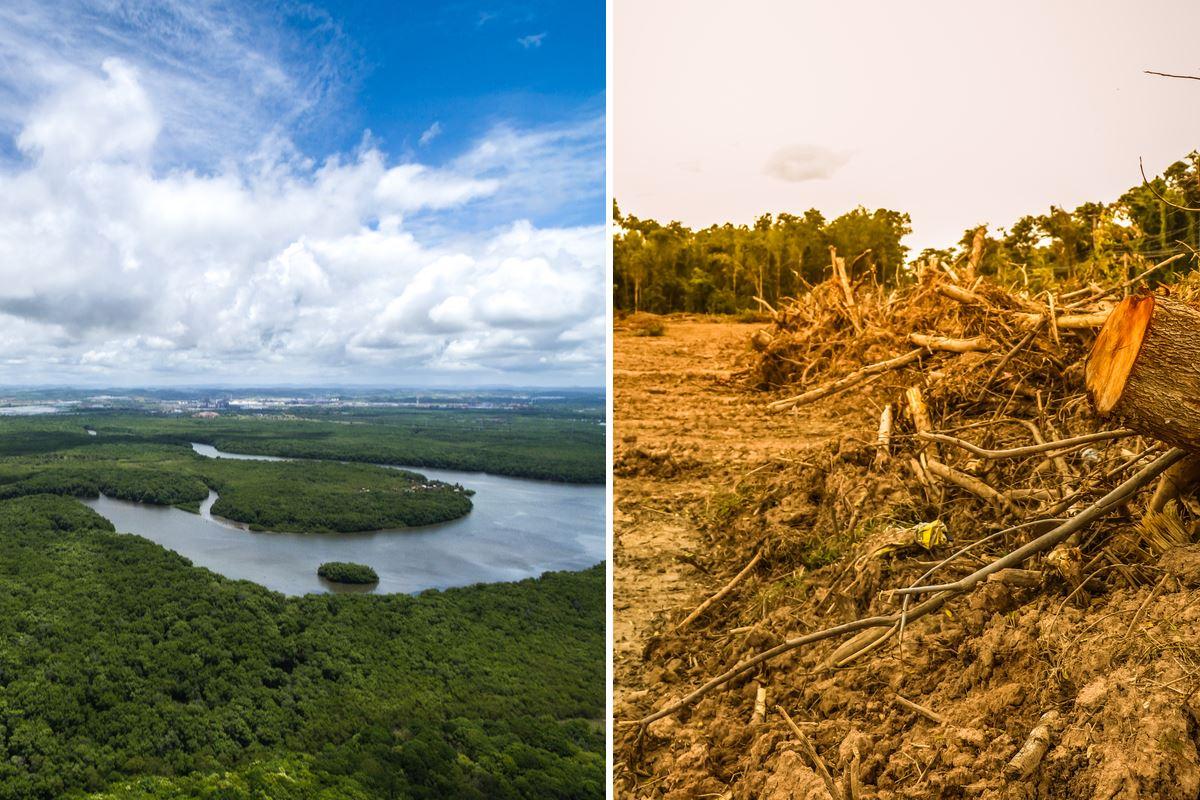 deforestazione brasile