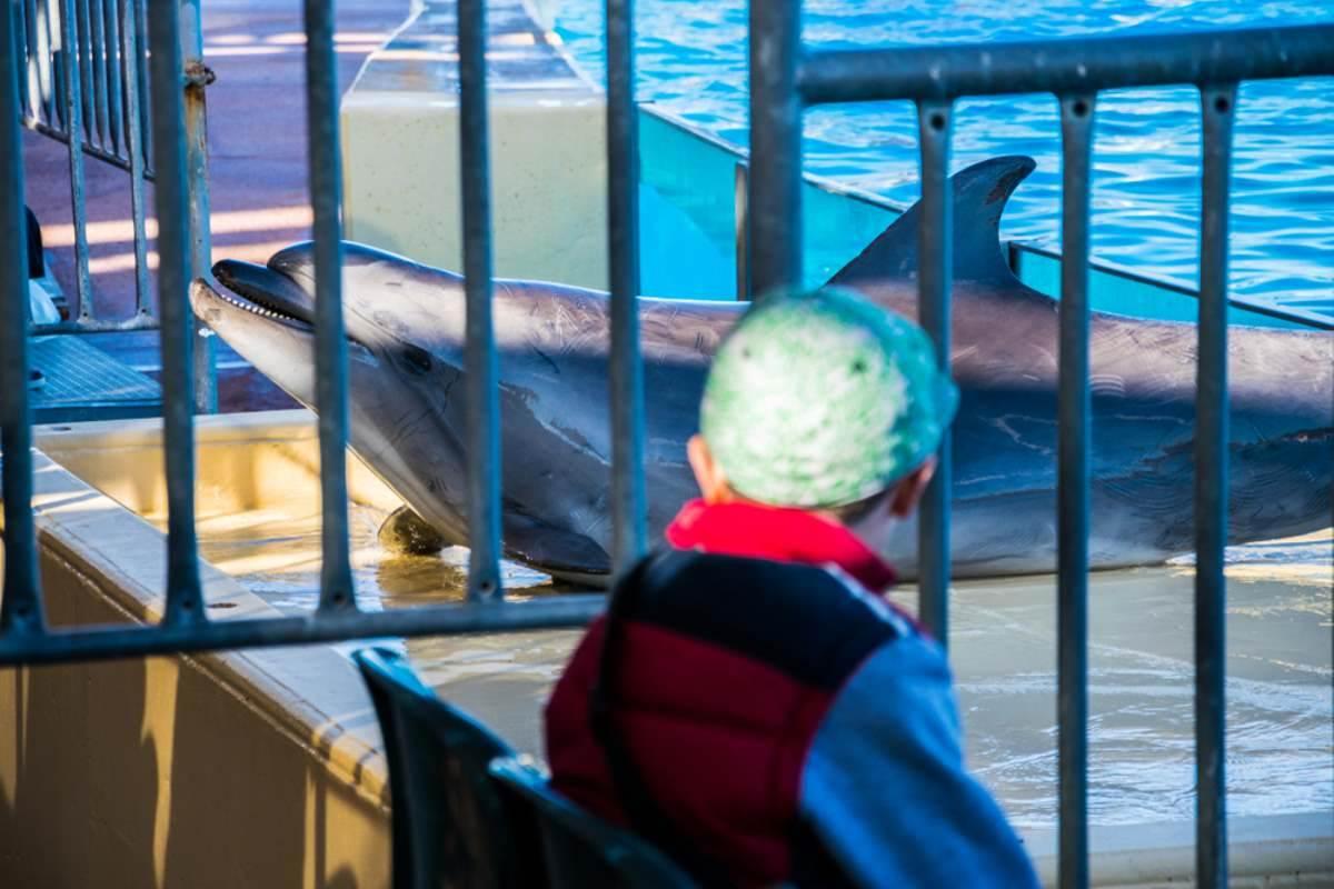 delfini cattivita