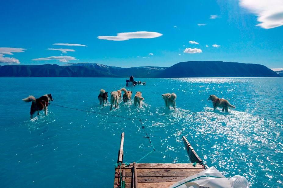 Cani slitta Groenlandia