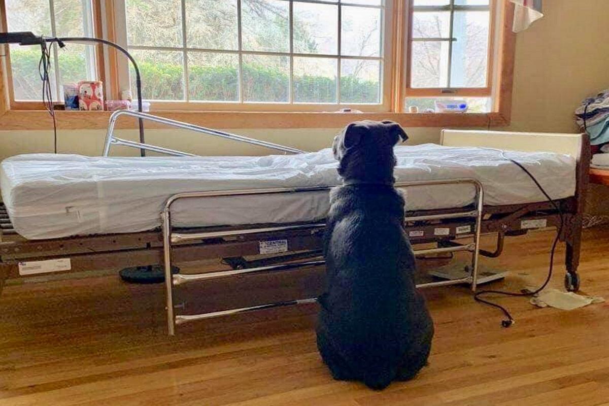 Moose aspetta il suo padrone