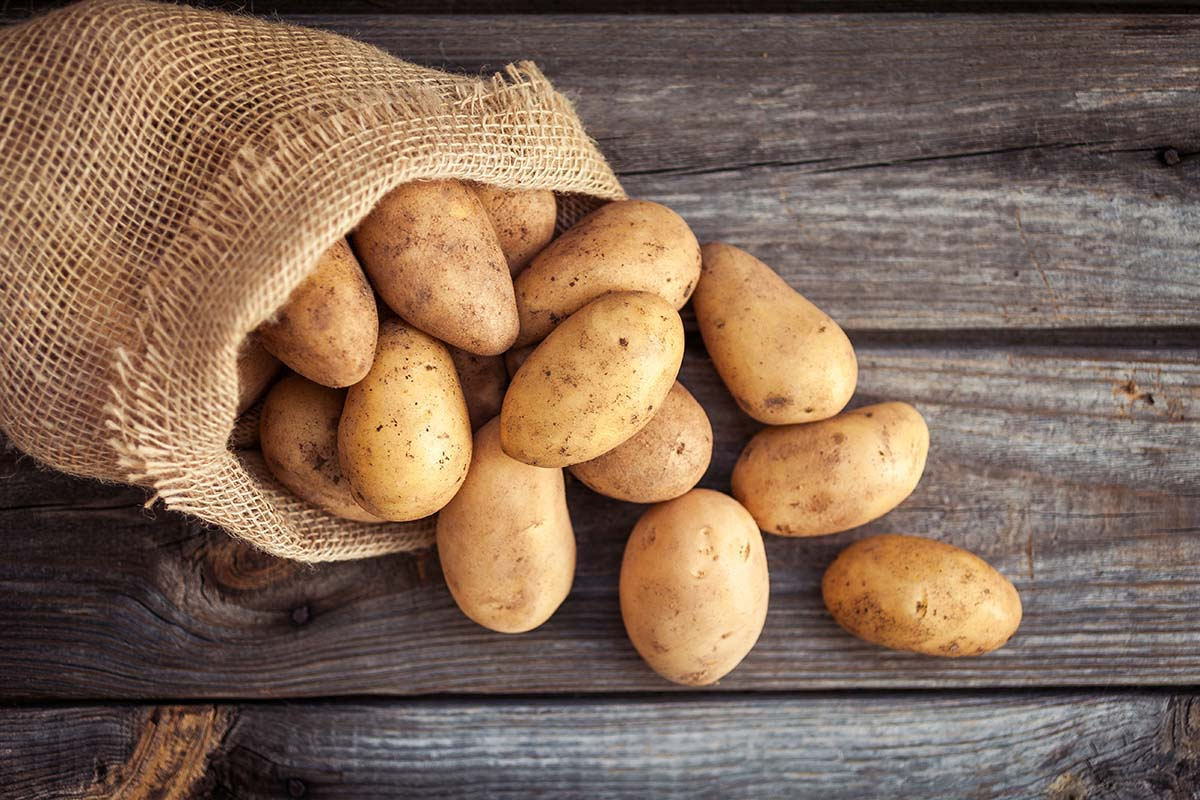 patate-test-