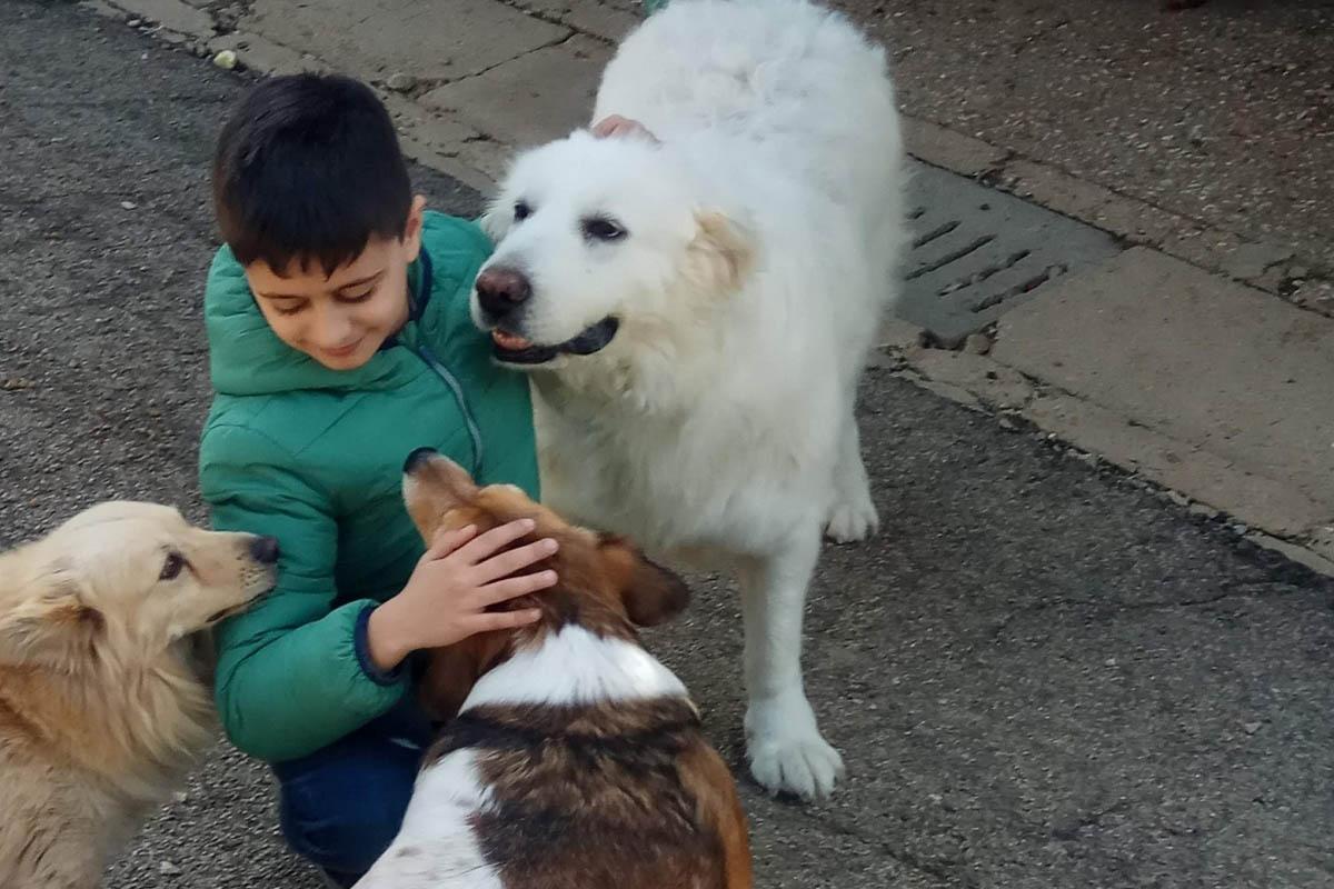 peppino-canile-vasto