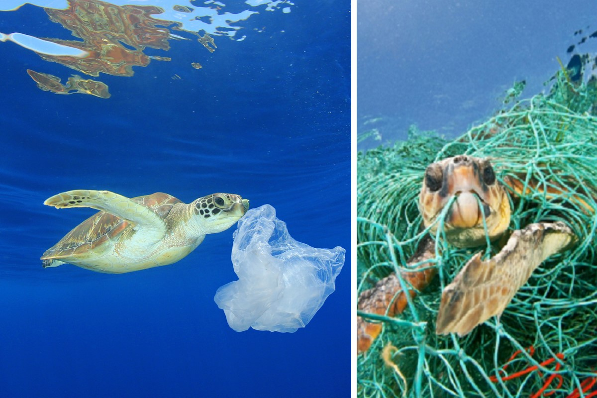 tartarughe rifiuti