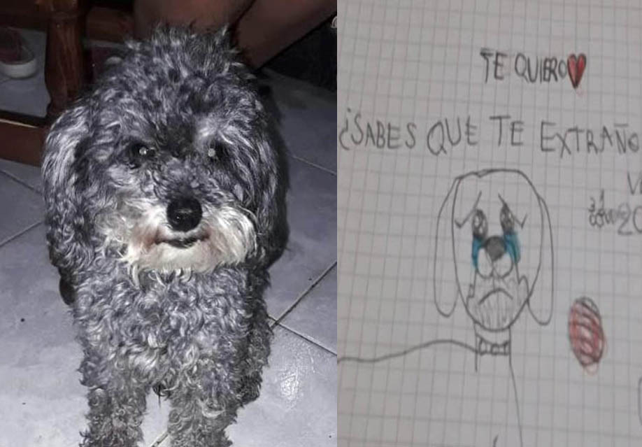 cane-bambino-autistico
