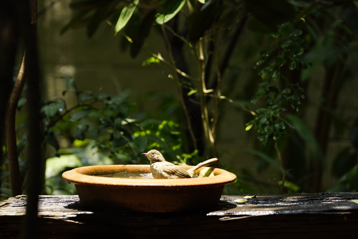 caldo uccelli