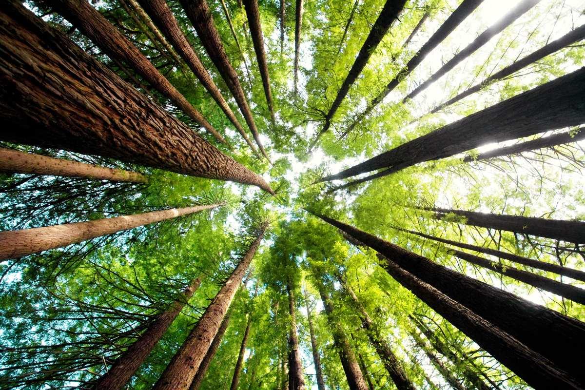 1 miliardo di alberi piantati in Australia