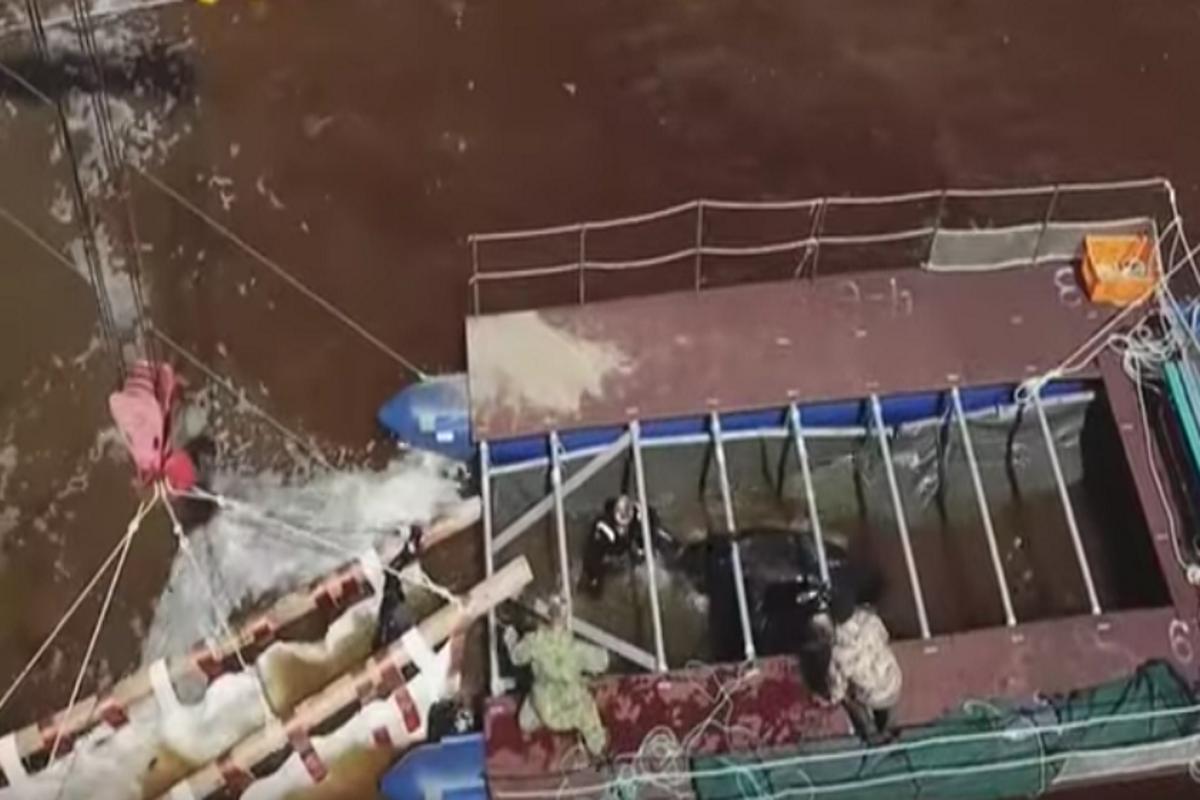 Balene liberate da lager russo