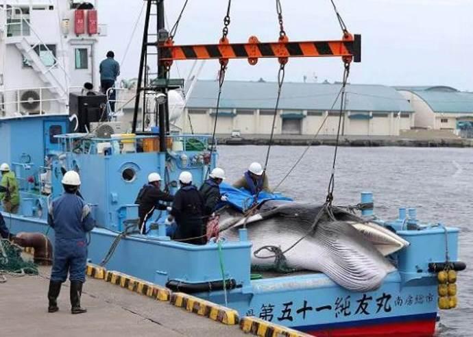 Giappone, caccia alle balene riparte dopo 31 anni di stop