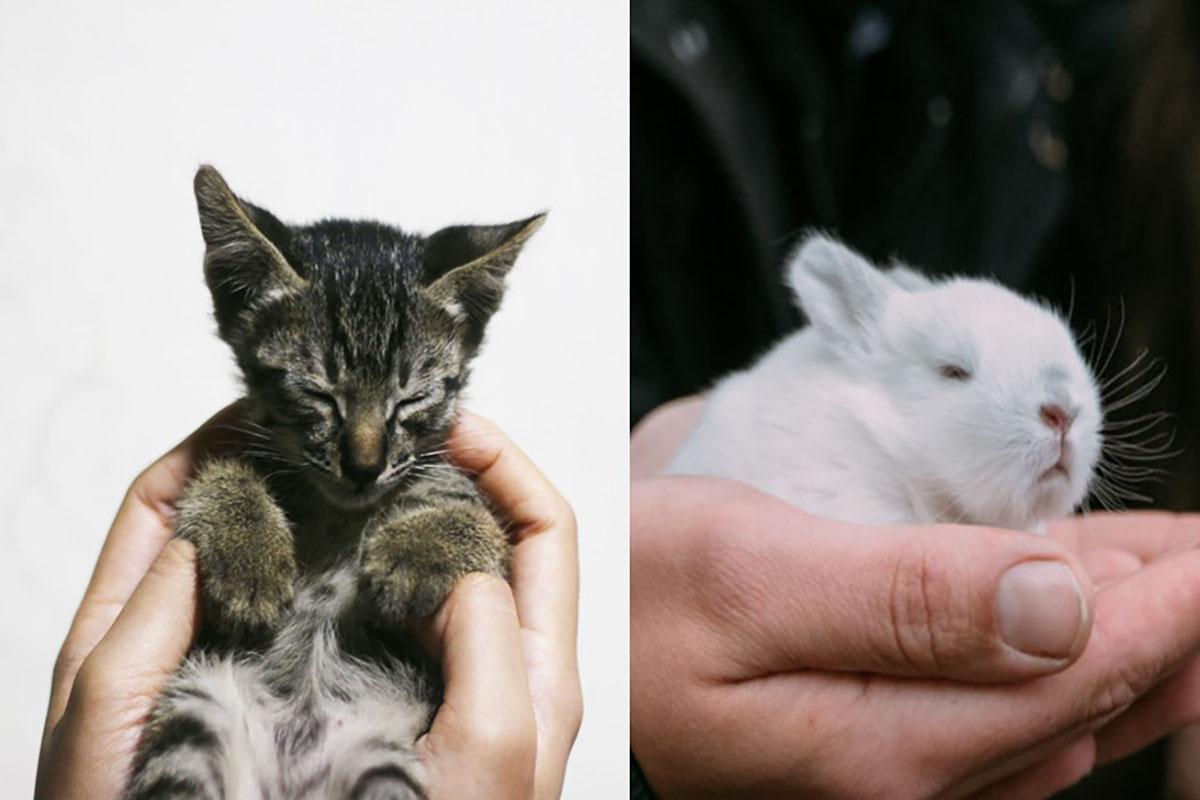 gatti-conigli