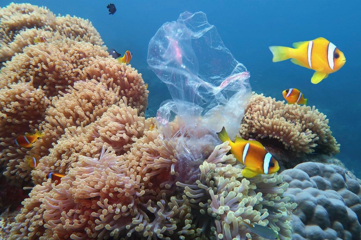 Coralli preferiscono la plastica al cibo naturale