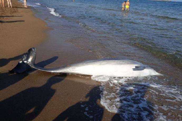 Delfini morti in Toscana