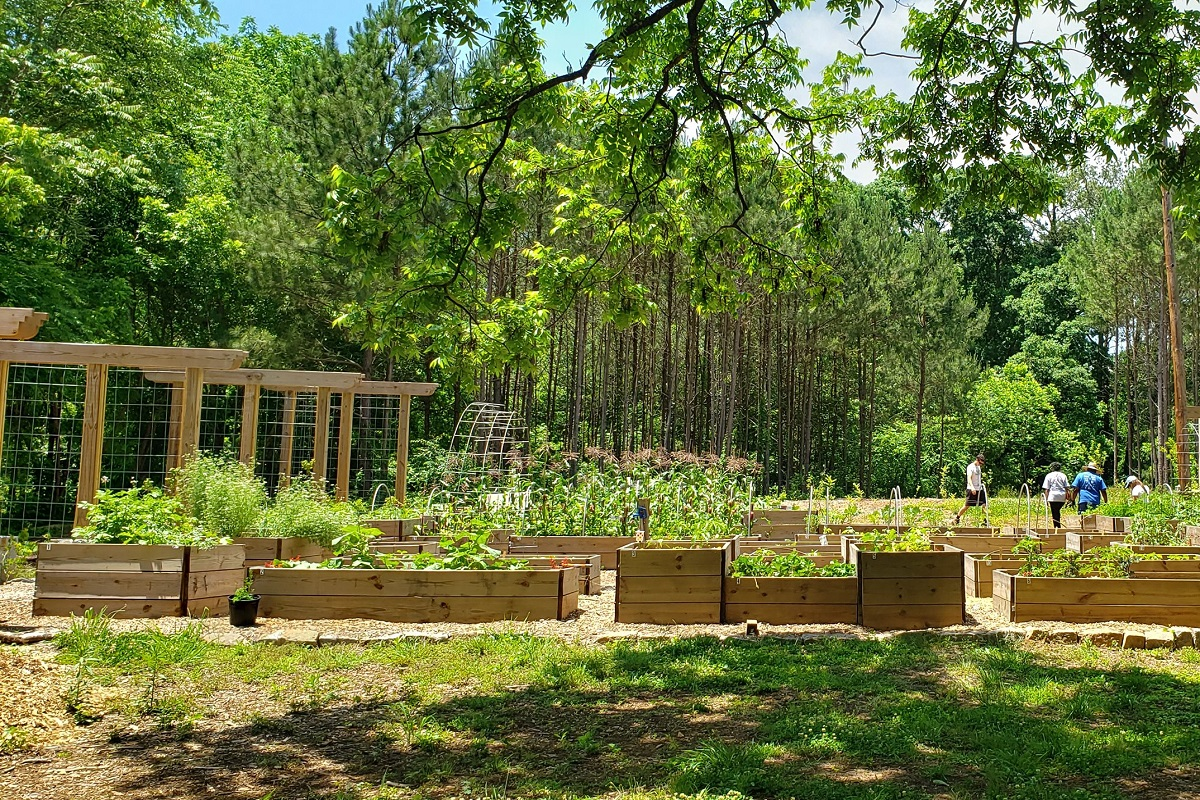 Food forest Atlanta