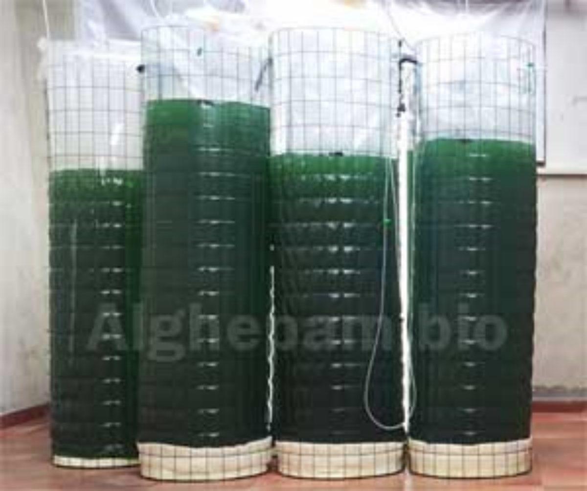fotobioreattori alga spirulina
