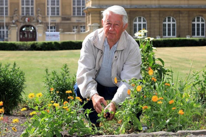 Multato anziano per aver piantato fiori