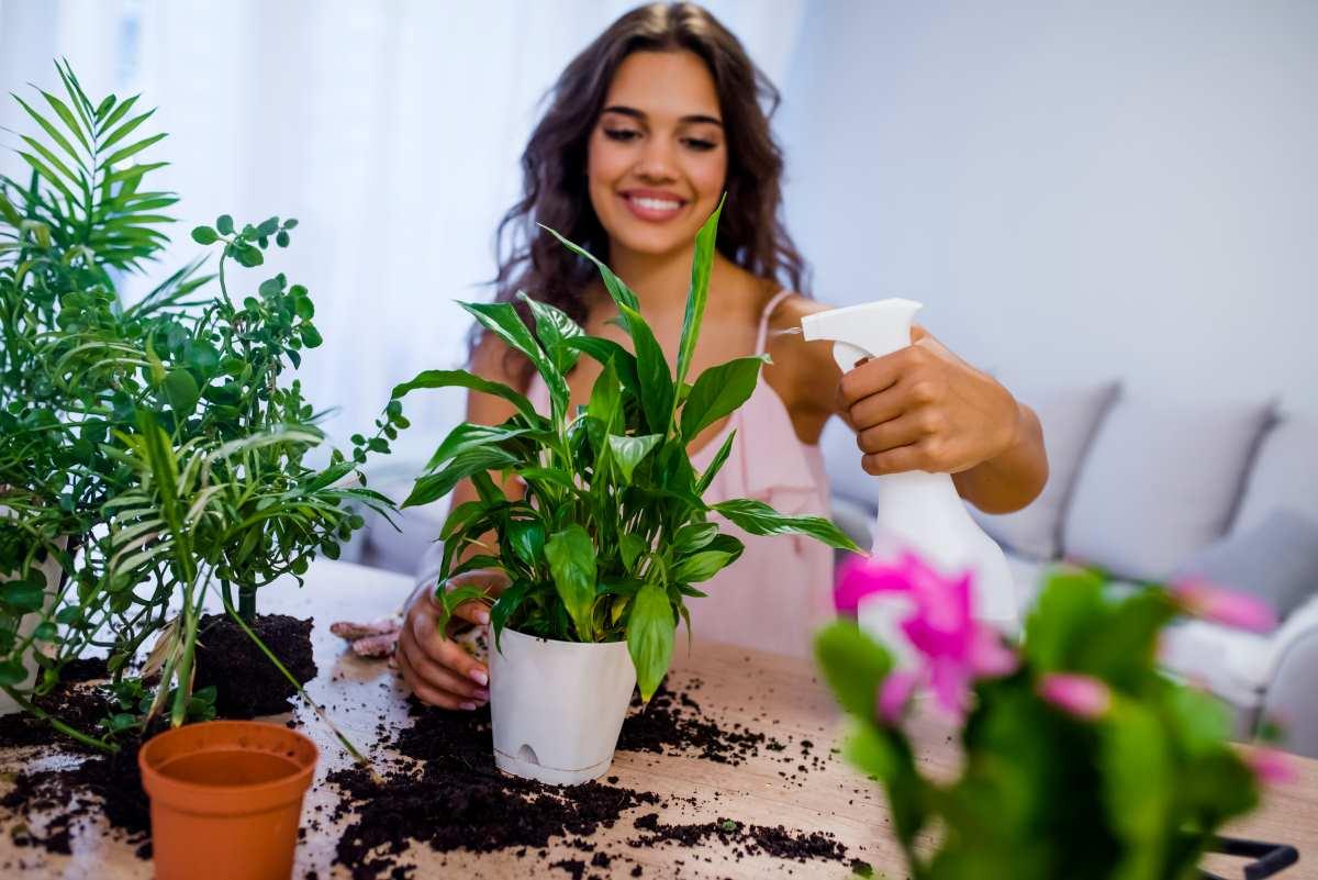 Nebulizzare le piante