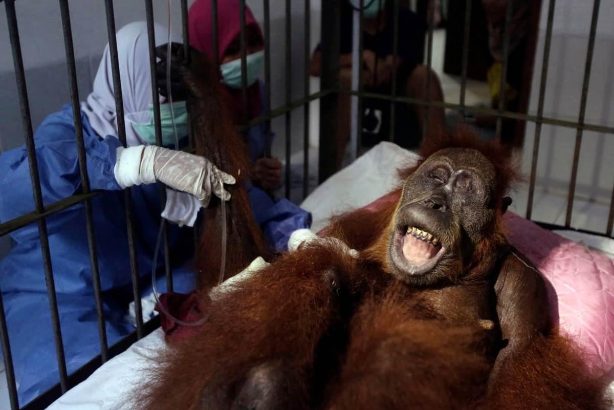 orango hope