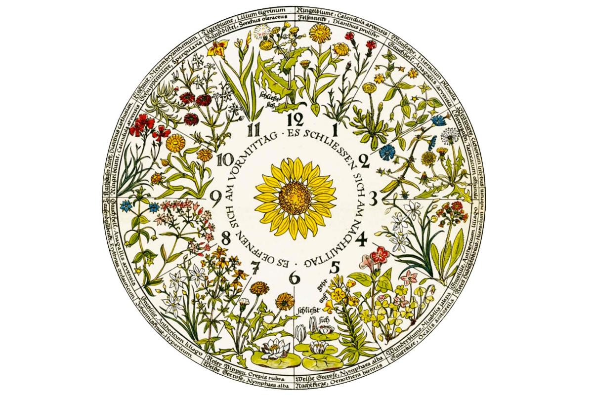 Orologio floreale di Linneo