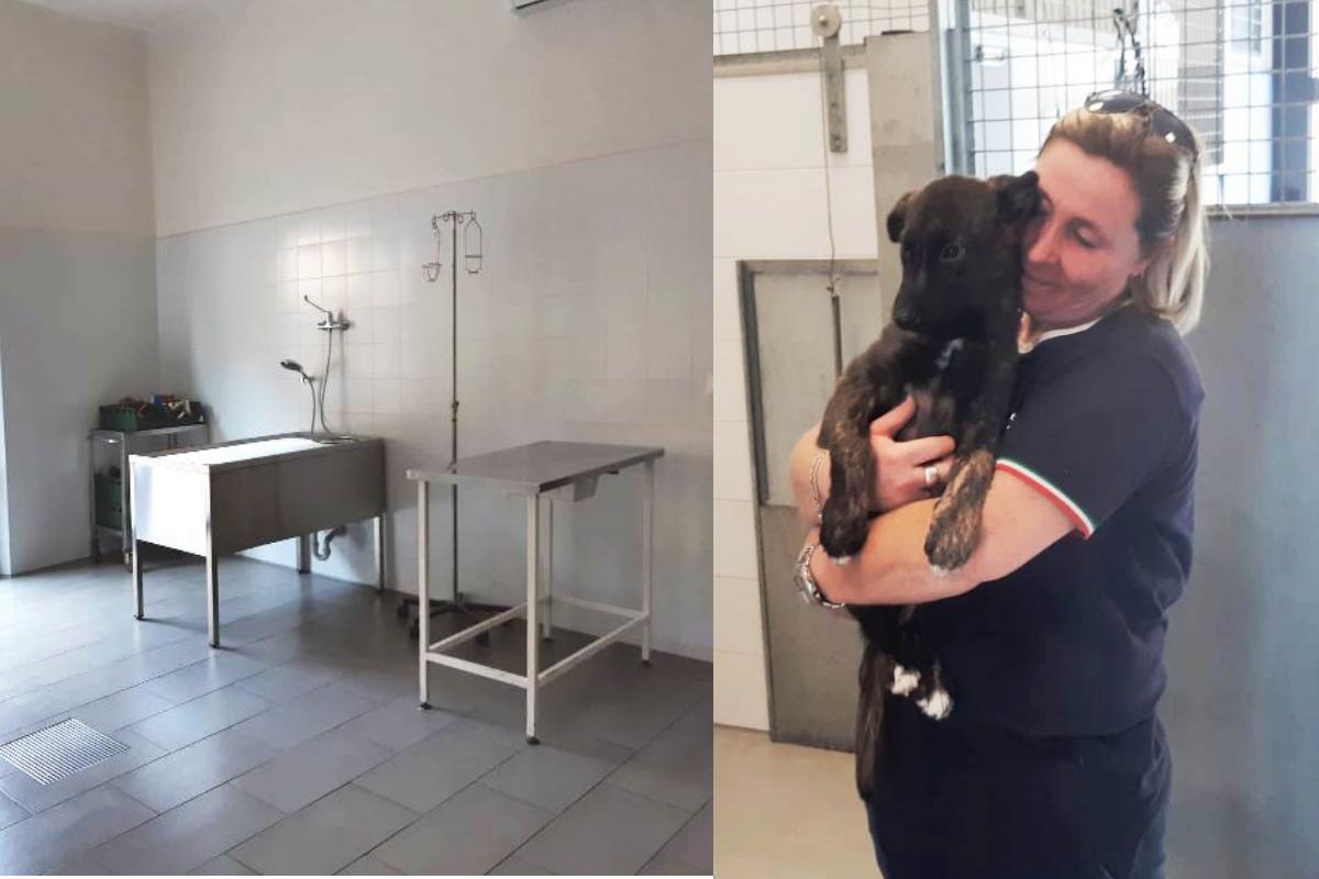 Ospedale veterinario Firenze