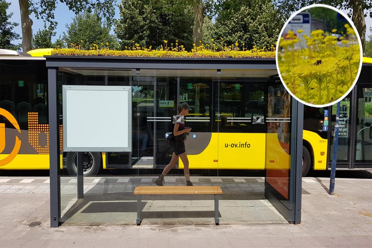 Pensiline autobus in Olanda