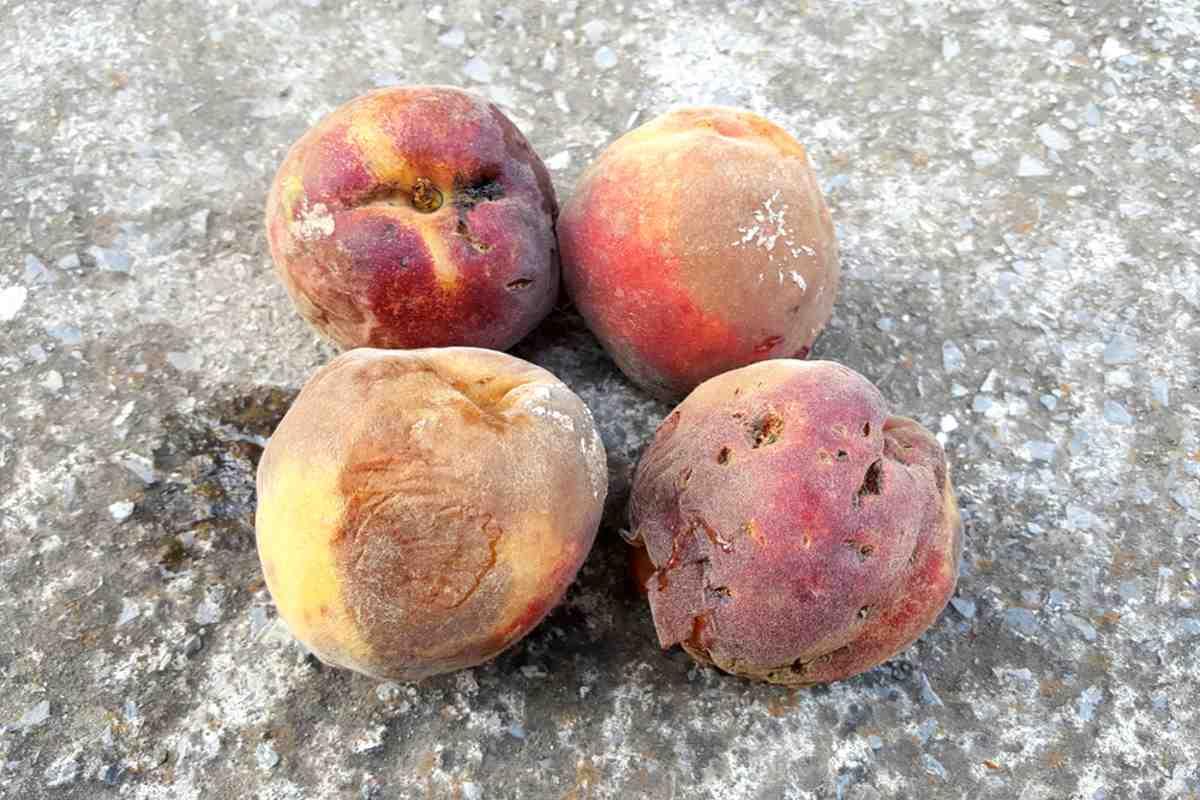 pesche-marce-succo-frutta