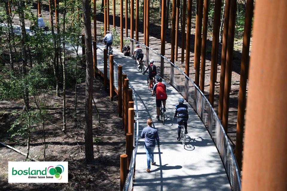 Pista ciclabile tra i boschi in Belgio