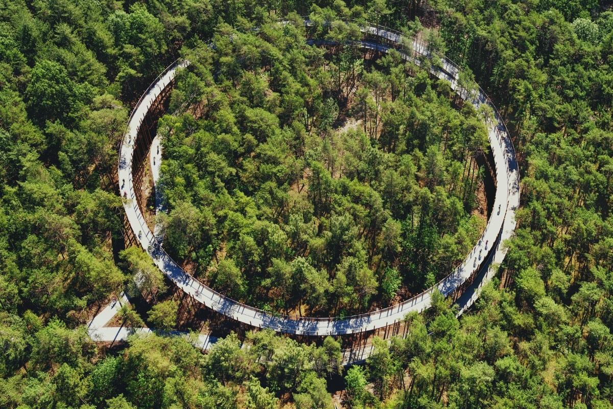 Pista ciclabile nel bosco in Belgio