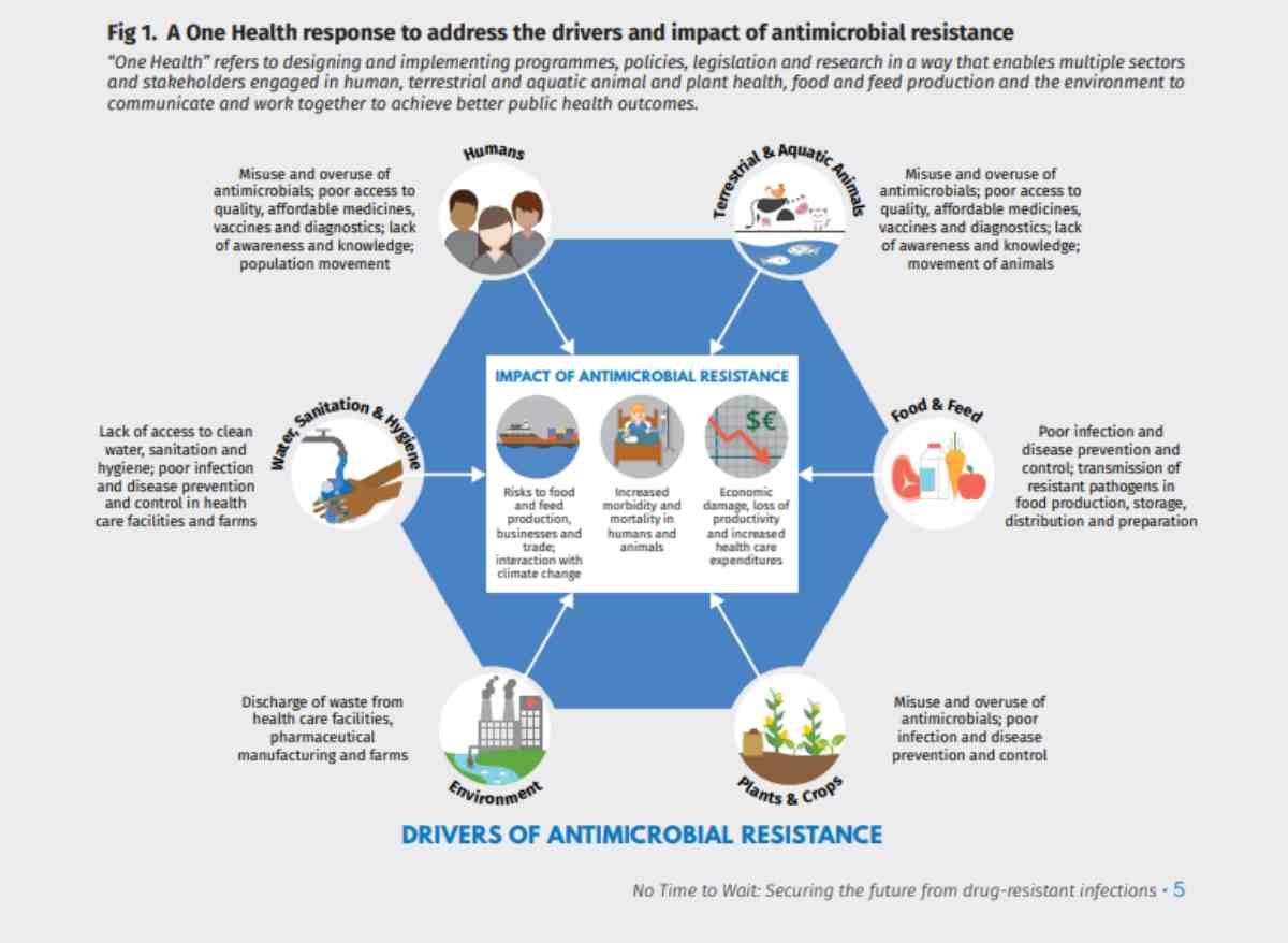 rischi antibiotici