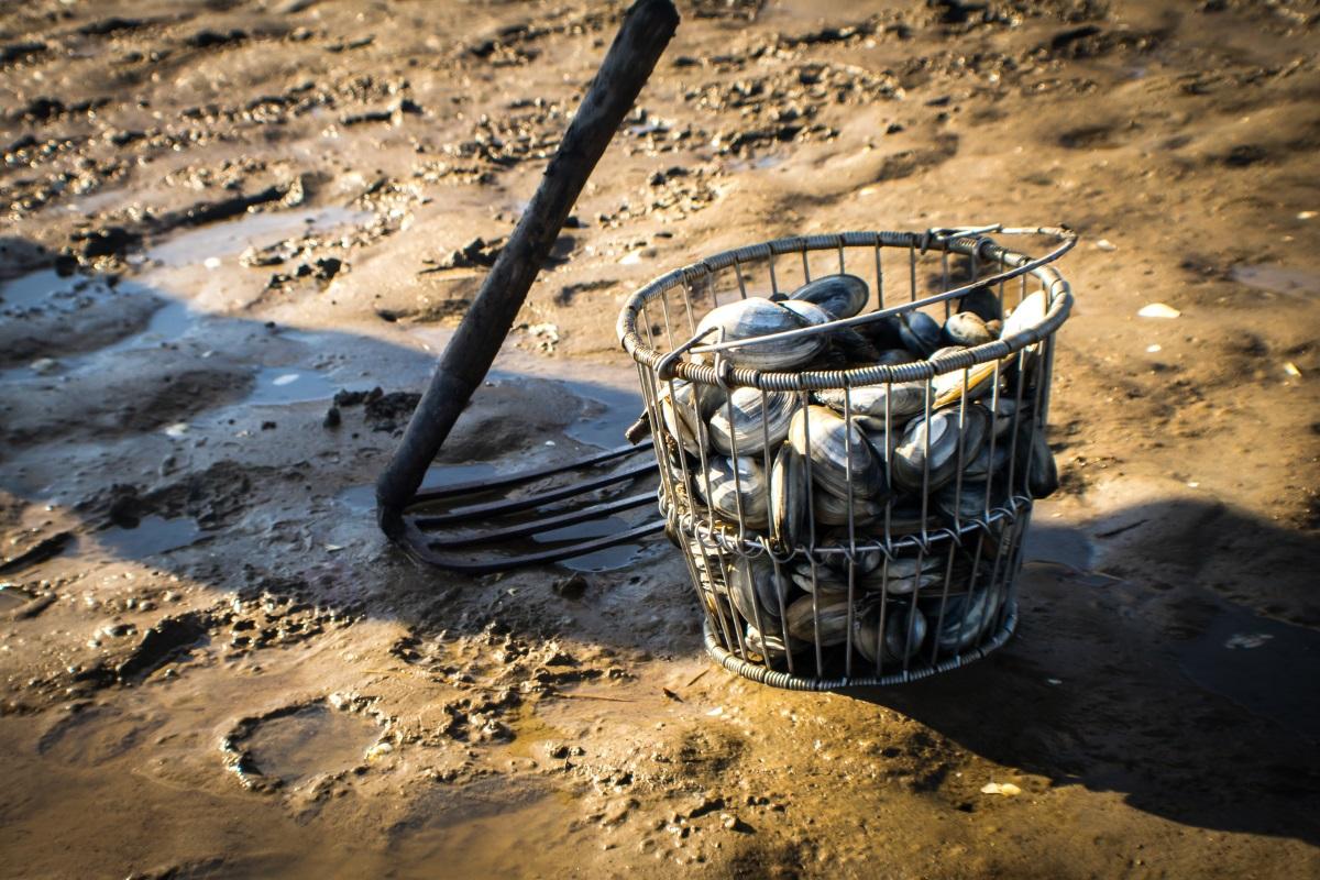 Vongole sequestrate pescate nel fiume Sarno