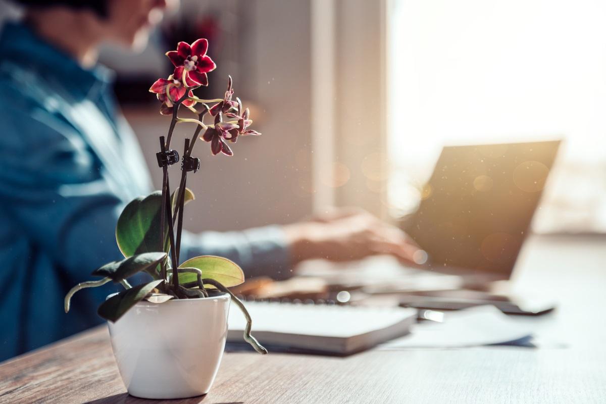 Tenere un'orchidea in ufficio