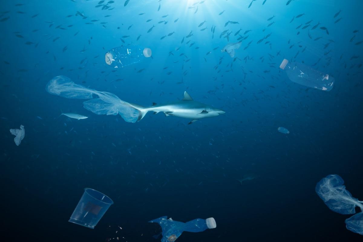 Squalo in un oceano di plastica