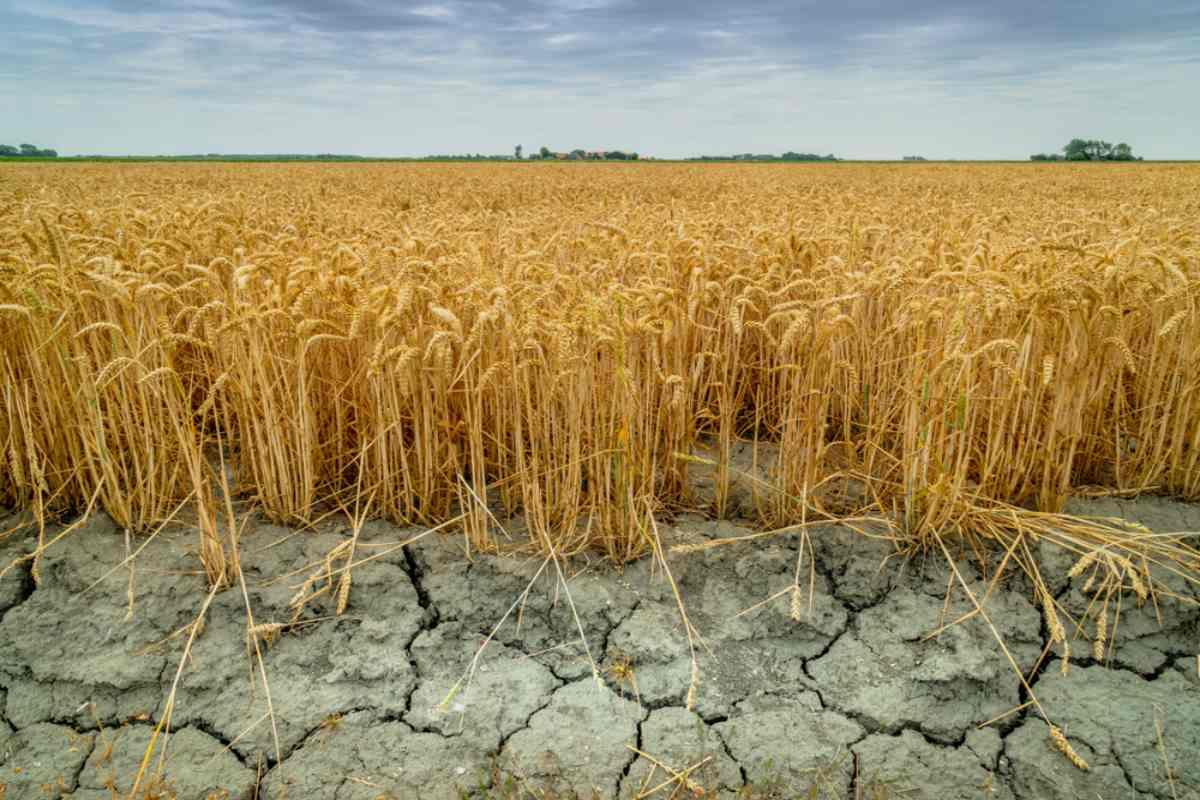 siccità risorse idriche