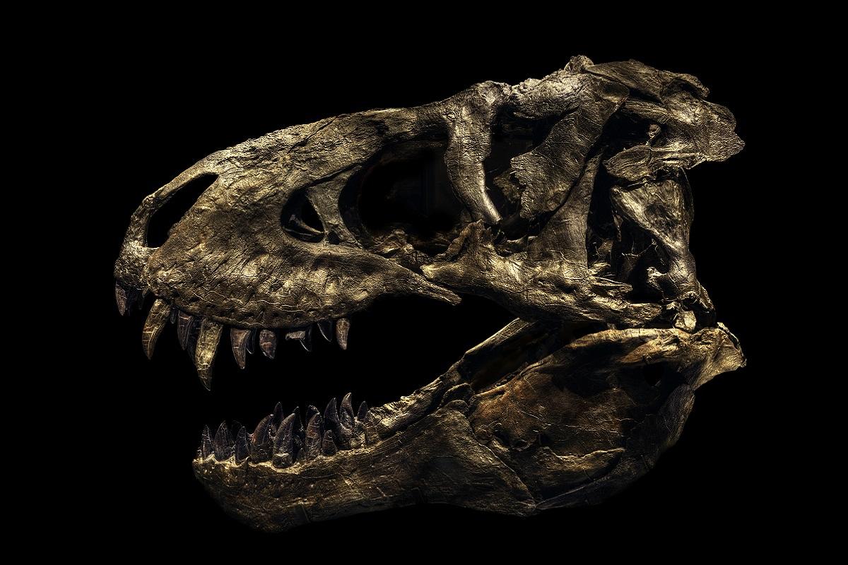 Tirannosauro della serie Evolution