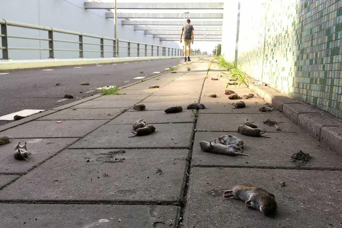 topi-suicidi-olanda