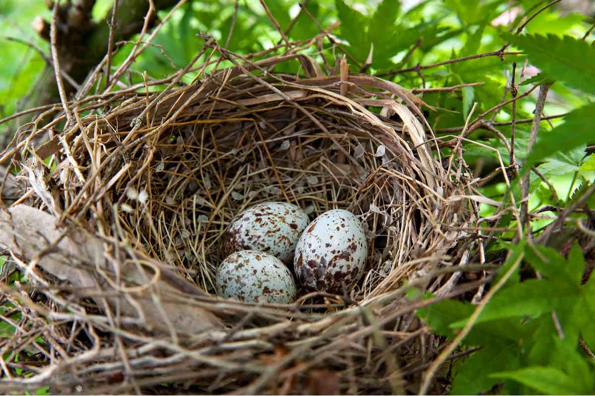 uccellini-comunicazione-uova